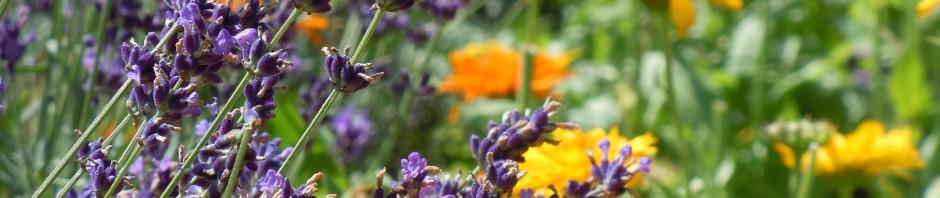 Blumenbilder Ingrid 023